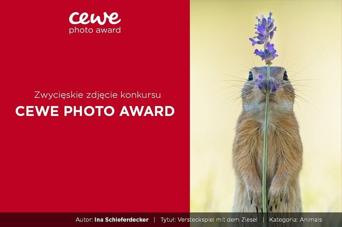CEWE Photo Award 2019 - wyniki konkursu